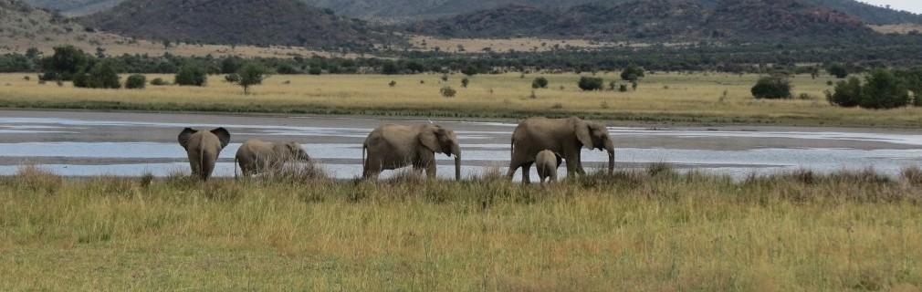 Pilanesberg Nationalpark Tagessafari