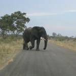 Touraco Tours - Krügerpark - Elephantt