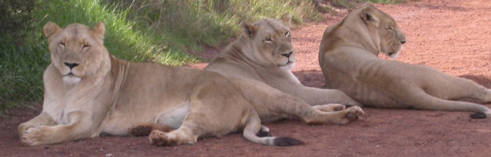 Löwen & Nashorn Park