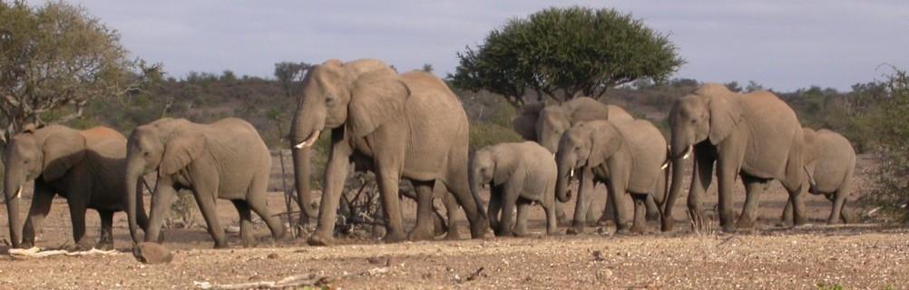 Botswana - Tuli Block - Elefanten