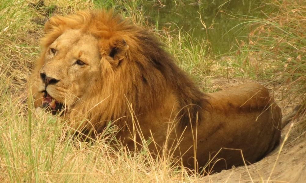 Ostafrica/Kenia - Masai Mara