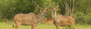 Touraco Tours - 4 Tage Krüger Safari