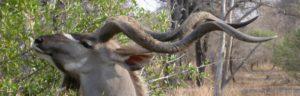 Touraco Travel Services - Krügerpark Safari - 5 Tage