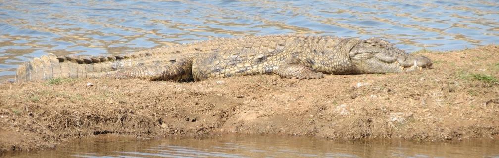 Pilanesberg Nationalpark und Sun City Tagessafari