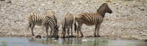Touraco Travel Services - Etosha Safari