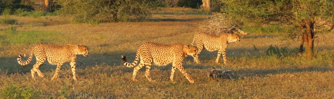 Krüger Nationalpark Tagessafari