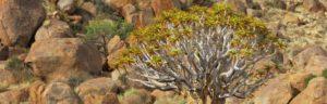 Touraco Tours - Der Süden Namibias