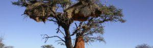 Touraco Travel Services - Grosse Namibia Reise