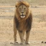 Touraco Tours : Pilanesberg Nationalpark Tagessafari