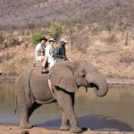 Touraco Tours and Transfers - Elefantenreiten in Sun City