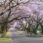 Touraco Tours : Pretoria City Tour