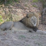 Touraco Tours and Transfers - Pilanesberg National Park