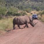 Touraco Tours : Nashorn