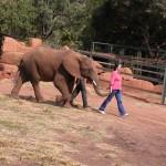 Touraco Tours - Elephant Sanctary
