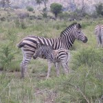 Touraco Tours - Klassische Südafrika Tour