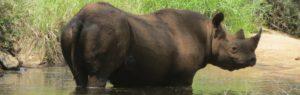 Touraco Tours - Krüger Luxus Safaris