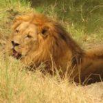 Touraco Travel Services - Krüger Safaris
