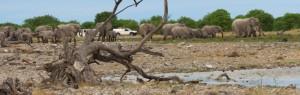 Touraco Travel Services - Elefanten in Etosha - Namibia- Botsawan-Victoriafälle