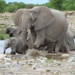 Touraco Travel Services - Elefanten - Etosha Safari