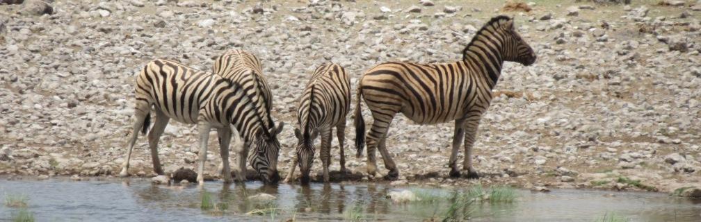 Etosha Safari