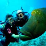Touraco Travel Services - Tauchen & Schnorcheln auf Mauritius