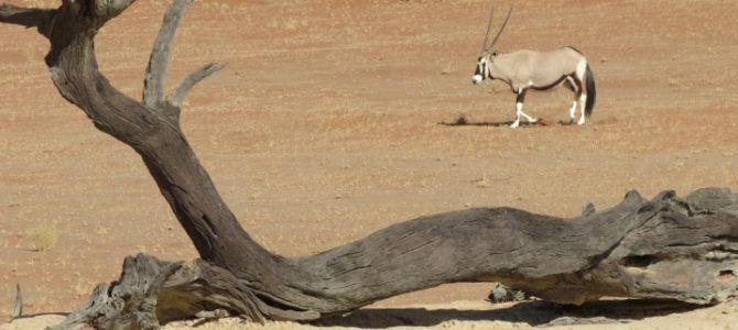 Namibias Wüste und Küste