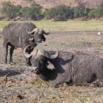 Touraco Travel Services - Okavango Delta, Chobe National Park & Victoriafälle