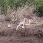 Touraco Travel Services - Okavango Delta, Chobe National Park und Victoriafälle