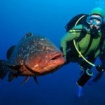 Touraco Travel Services - Scuba Diving - Mauritius