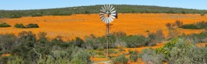 Namaqualand Tour - Touraco Tours