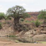 Krüger Park Safari - Touraco Tours