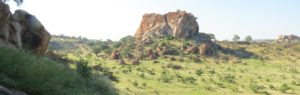 Touraco Travel Services - Mapungubwe Tour