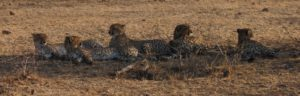 Touraco Travel Services - Pilanesberg Safaris