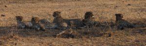 Touraco Travel Services - Pilanesberg Safaris