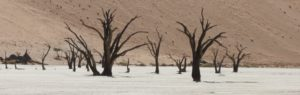 Touraco Travel Services - Sossusvlei Tour