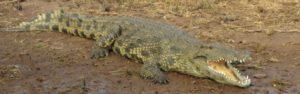 Touraco Travel Services - Botswana Zelt Safari