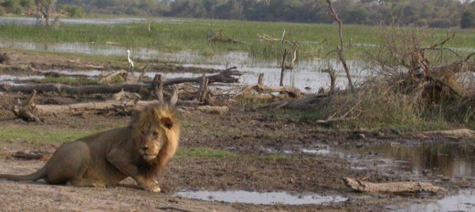 Botswana Parks Zelt Safari – 10 Tage