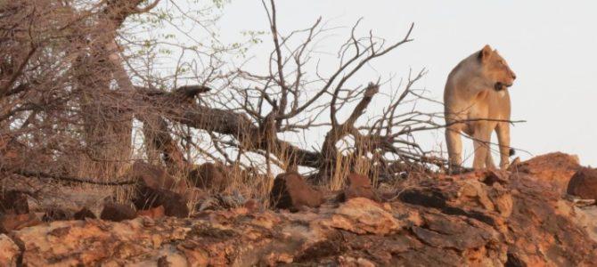 Zimbabwe Botswana Game Tracker – Unterkunft Safari – 16 Tage