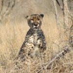 Pilanesberg Safari - Touraco Tours - Pretoria, Südafrika  Afrika