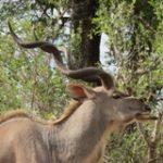 Touraco Travel Services - Pilanesberg Safari